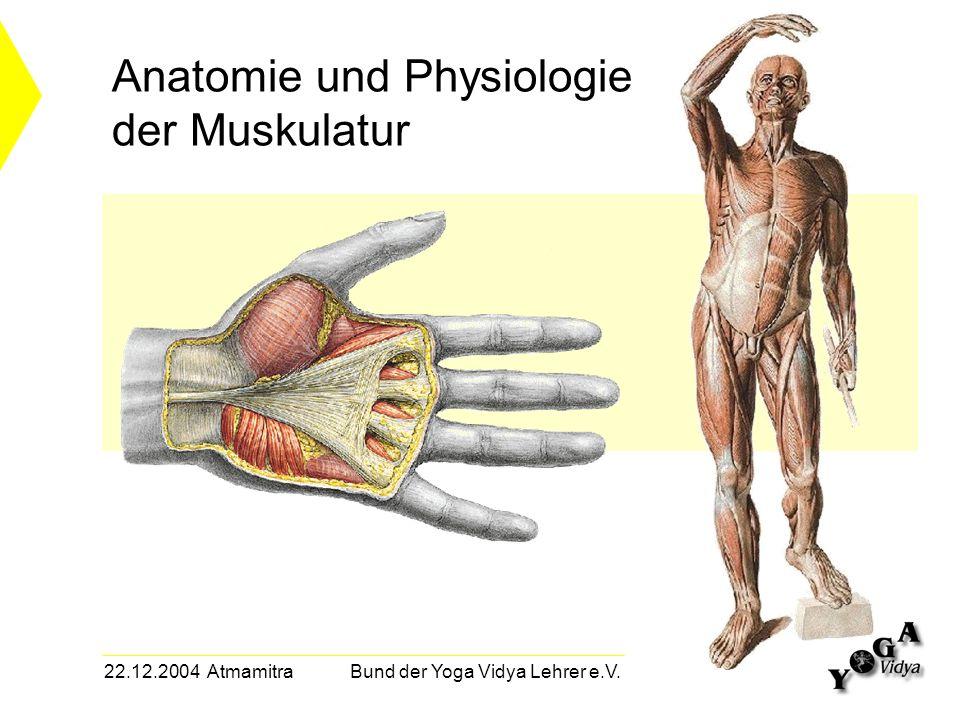 22.12.2004 Atmamitra Bund der Yoga Vidya Lehrer e.V. Anatomie und Physiologie der Muskulatur