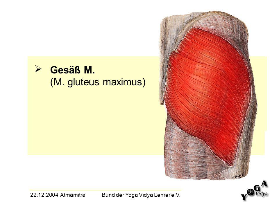 22.12.2004 Atmamitra Bund der Yoga Vidya Lehrer e.V. Gesäß M. (M. gluteus maximus)