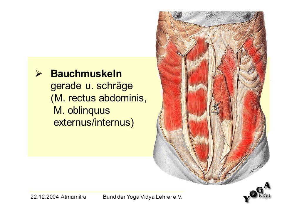 22.12.2004 Atmamitra Bund der Yoga Vidya Lehrer e.V. Bauchmuskeln gerade u. schräge (M. rectus abdominis, M. oblinquus externus/internus)