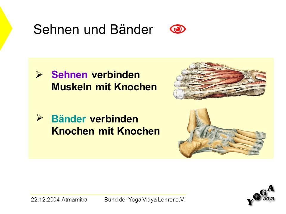 22.12.2004 Atmamitra Bund der Yoga Vidya Lehrer e.V. Sehnen verbinden Muskeln mit Knochen Sehnen und Bänder Bänder verbinden Knochen mit Knochen