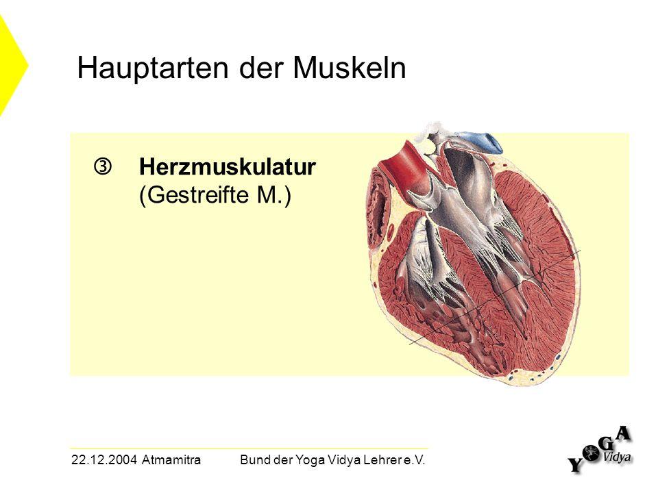 22.12.2004 Atmamitra Bund der Yoga Vidya Lehrer e.V. Hauptarten der Muskeln Herzmuskulatur (Gestreifte M.)