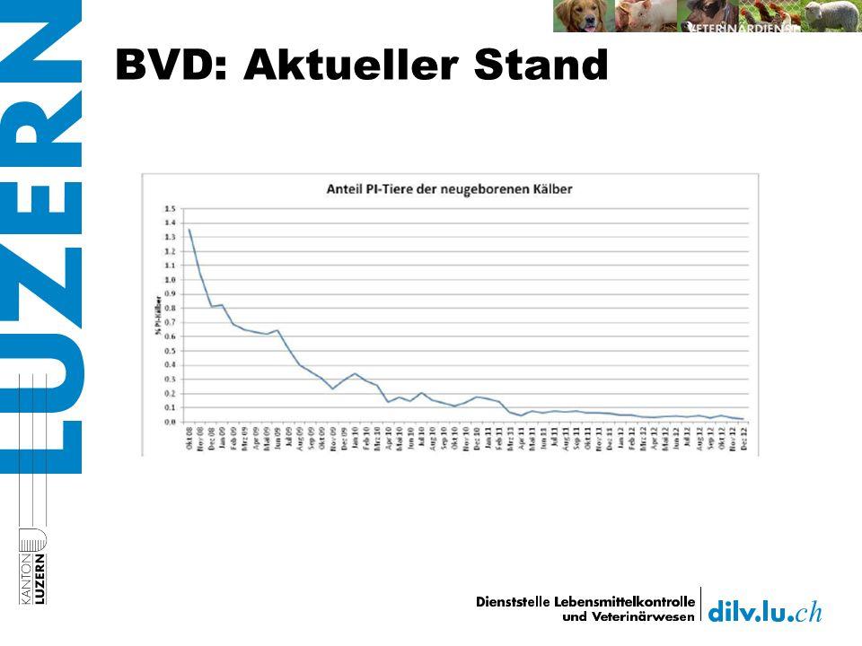 BVD: Aktueller Stand