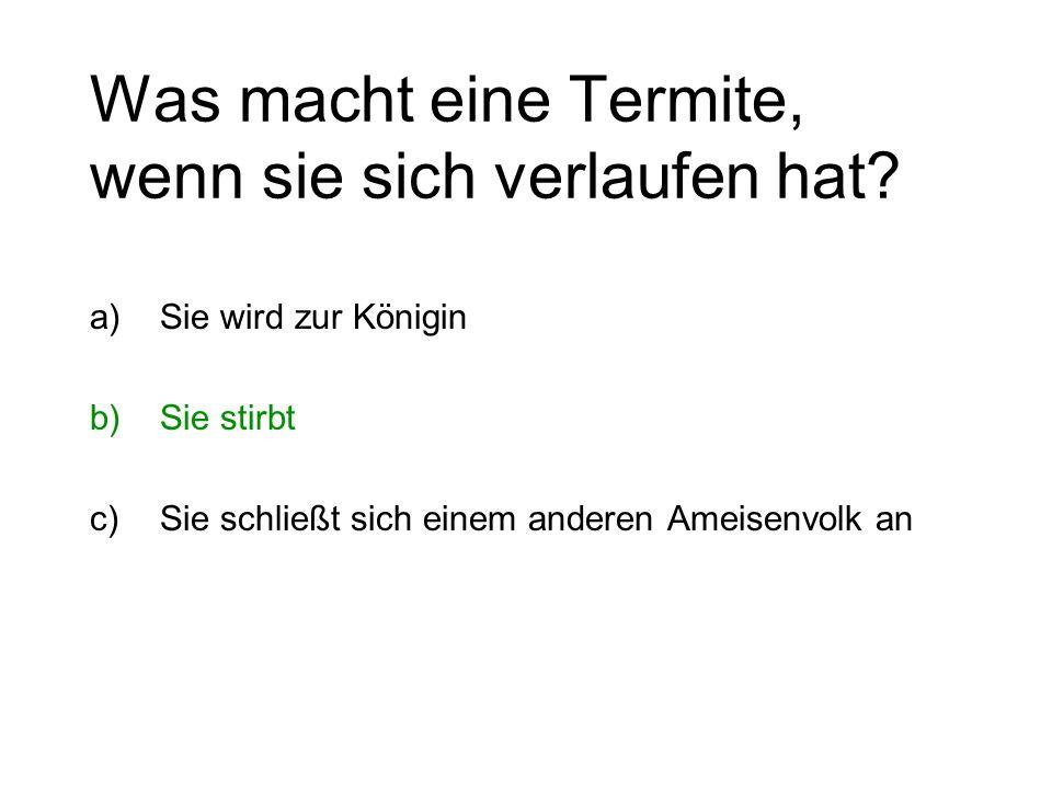 Was macht eine Termite, wenn sie sich verlaufen hat? a)Sie wird zur Königin b)Sie stirbt c)Sie schließt sich einem anderen Ameisenvolk an