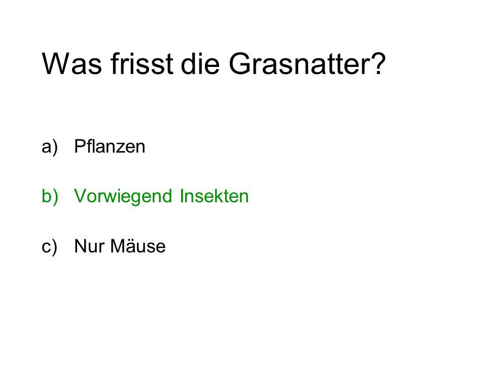 Was frisst die Grasnatter? a)Pflanzen b)Vorwiegend Insekten c)Nur Mäuse