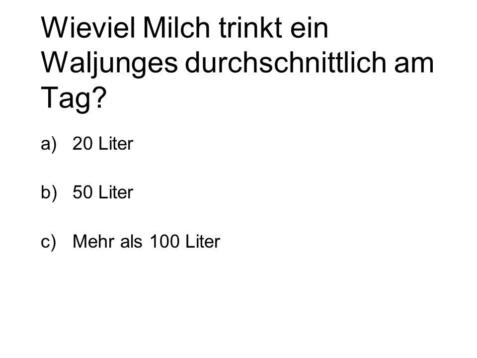 Wieviel Milch trinkt ein Waljunges durchschnittlich am Tag? a)20 Liter b)50 Liter c)Mehr als 100 Liter