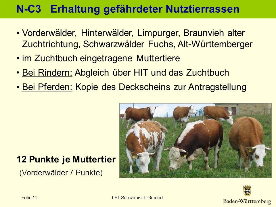 Folie 11 LEL Schwäbisch Gmünd N-C3 Erhaltung gefährdeter Nutztierrassen 12 Punkte je Muttertier (Vorderwälder 7 Punkte) Vorderwälder, Hinterwälder, Li