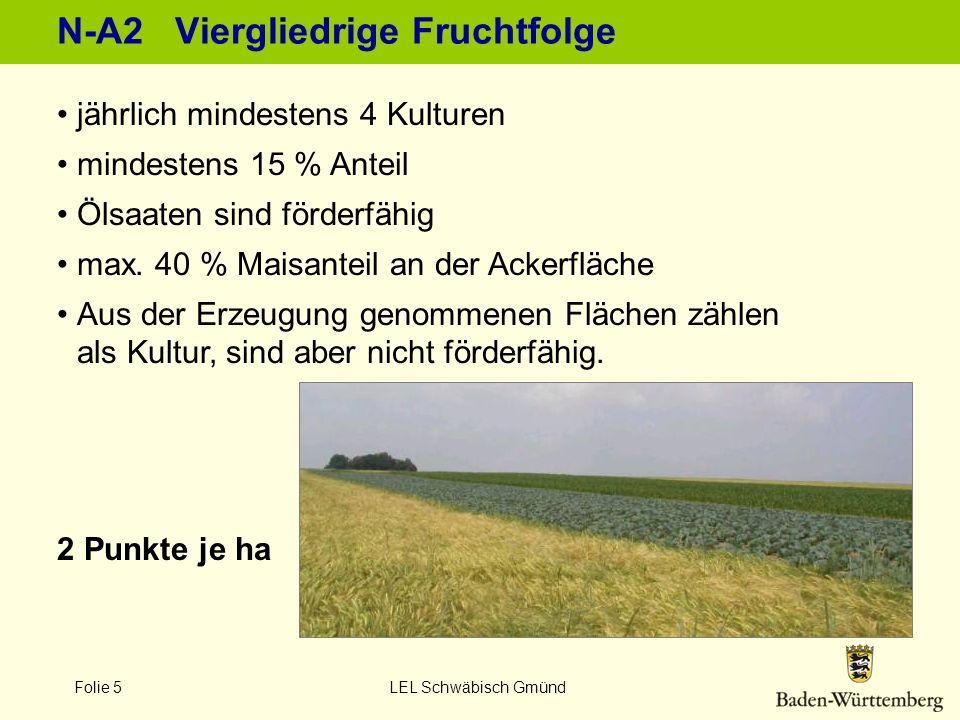 Folie 5 LEL Schwäbisch Gmünd N-A2 Viergliedrige Fruchtfolge jährlich mindestens 4 Kulturen mindestens 15 % Anteil Ölsaaten sind förderfähig max. 40 %