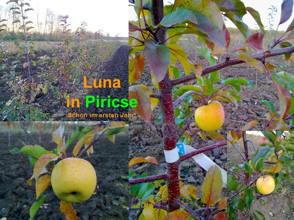 Luna in Piricse Schon im ersten Jahr!