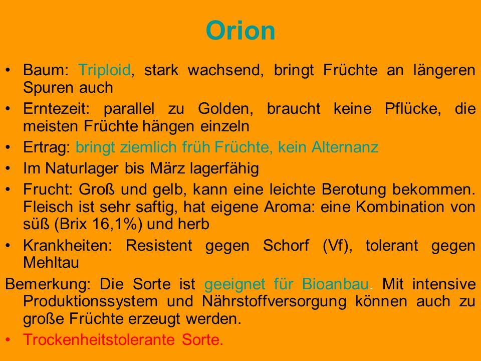 Orion Baum: Triploid, stark wachsend, bringt Früchte an längeren Spuren auch Erntezeit: parallel zu Golden, braucht keine Pflücke, die meisten Früchte