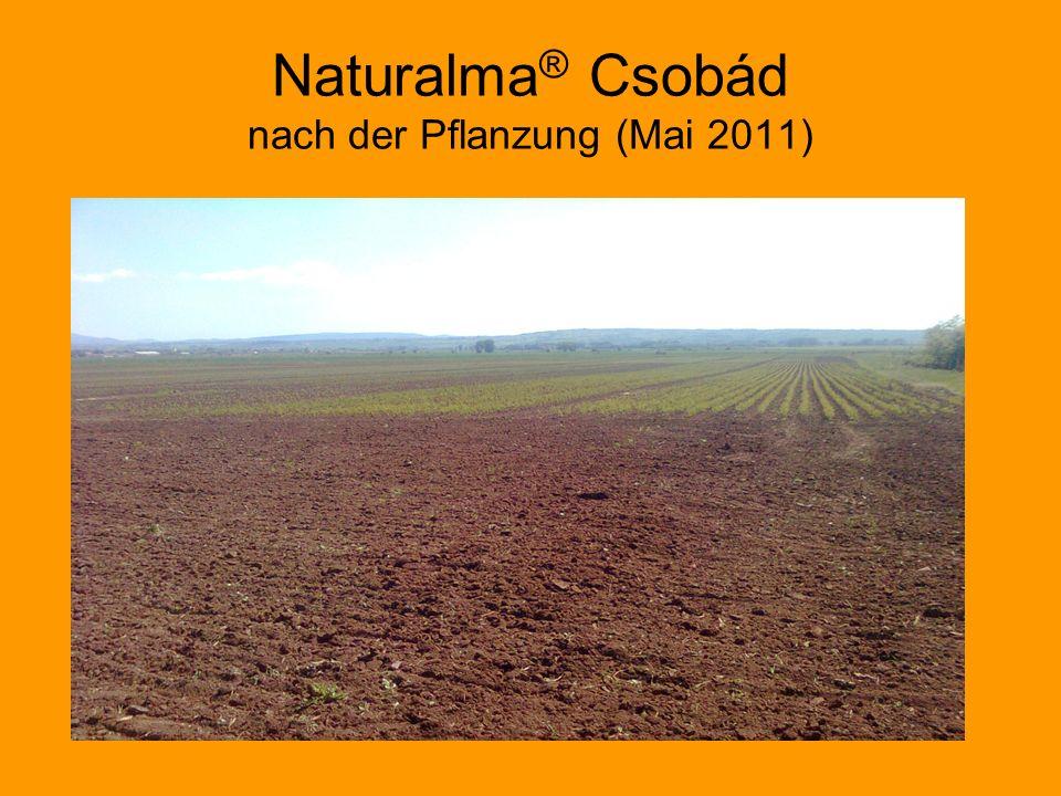 Naturalma ® Csobád nach der Pflanzung (Mai 2011)