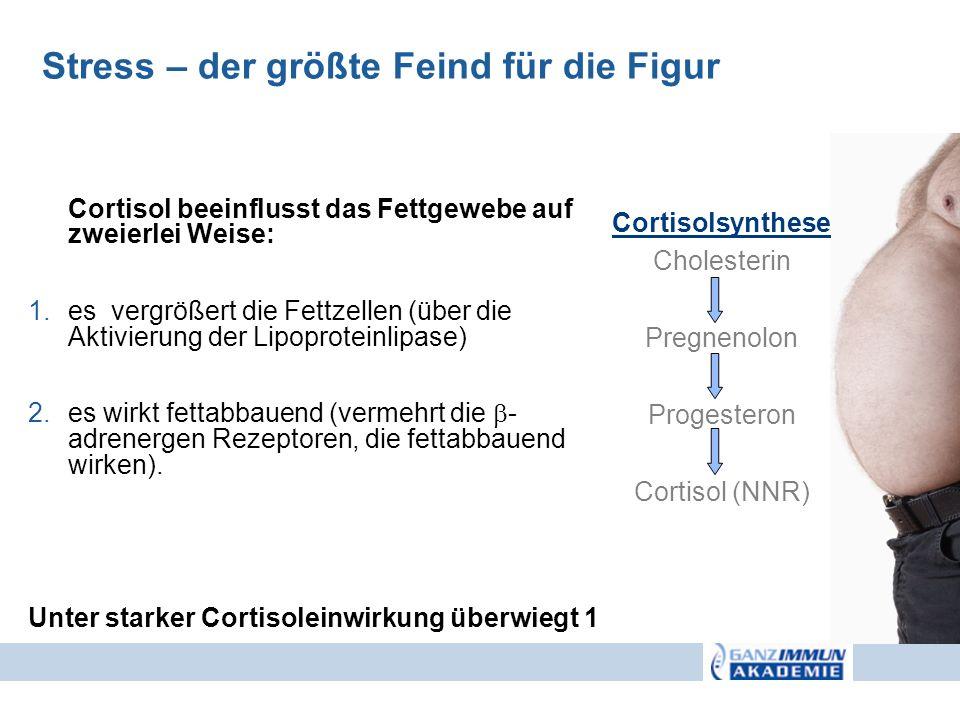 Cortisol beeinflusst das Fettgewebe auf zweierlei Weise: 1.es vergrößert die Fettzellen (über die Aktivierung der Lipoproteinlipase) 2.es wirkt fettab