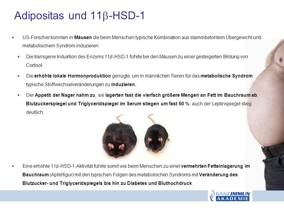 Adipositas und 11 -HSD-1 US-Forscher konnten in Mäusen die beim Menschen typische Kombination aus stammbetontem Übergewicht und metabolischem Syndrom