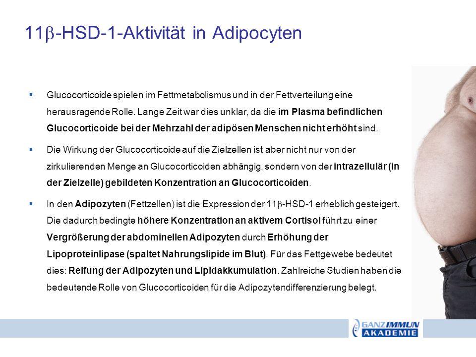 11 -HSD-1-Aktivität in Adipocyten Glucocorticoide spielen im Fettmetabolismus und in der Fettverteilung eine herausragende Rolle. Lange Zeit war dies