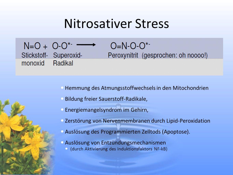 Nitrosativer Stress Hemmung des Atmungsstoffwechsels in den Mitochondrien Bildung freier Sauerstoff-Radikale, Energiemangelsyndrom im Gehirn, Zerstöru