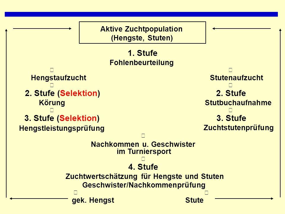 Aktive Zuchtpopulation (Hengste, Stuten) 1.