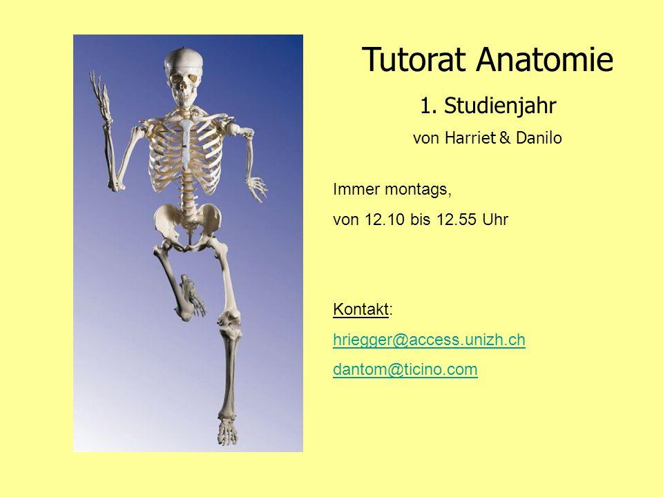 Tutorat Anatomie 1.Studienjahr von Harriet & Danilo Immer montags, von 12.10 bis 12.55 Uhr Kontakt: hriegger@access.unizh.ch dantom@ticino.com