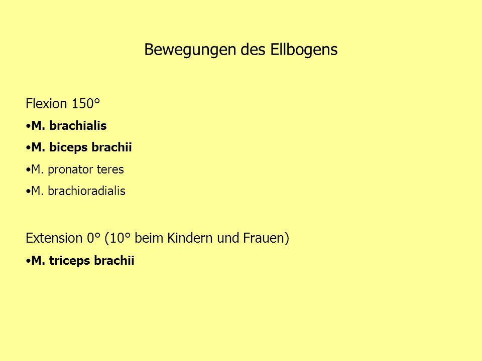 Bewegungen des Ellbogens Flexion 150° M. brachialis M. biceps brachii M. pronator teres M. brachioradialis Extension 0° (10° beim Kindern und Frauen)