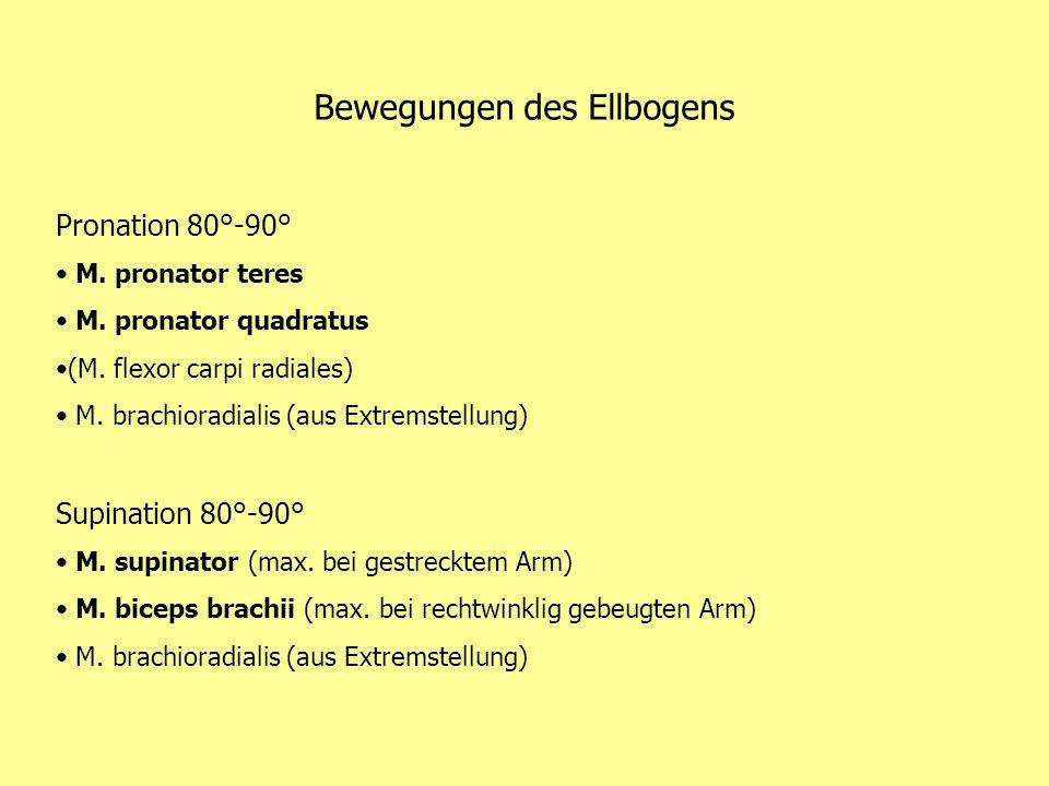 Bewegungen des Ellbogens Pronation 80°-90° M. pronator teres M. pronator quadratus (M. flexor carpi radiales) M. brachioradialis (aus Extremstellung)
