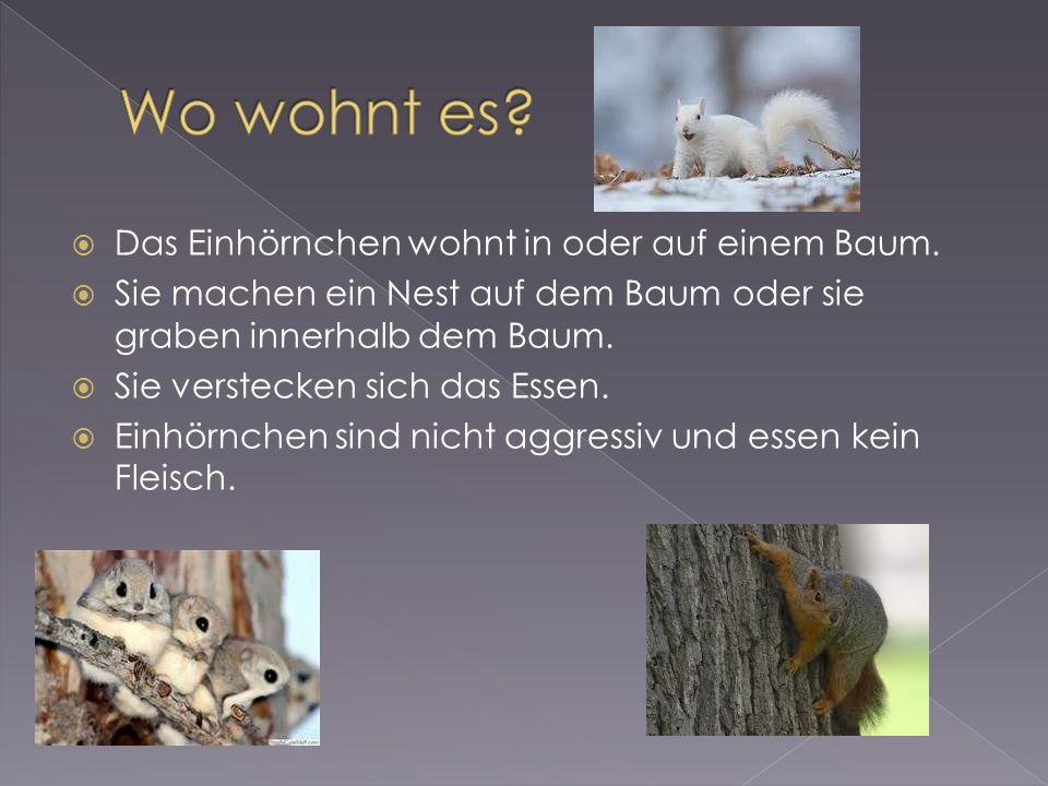 Das Einhörnchen wohnt in oder auf einem Baum.