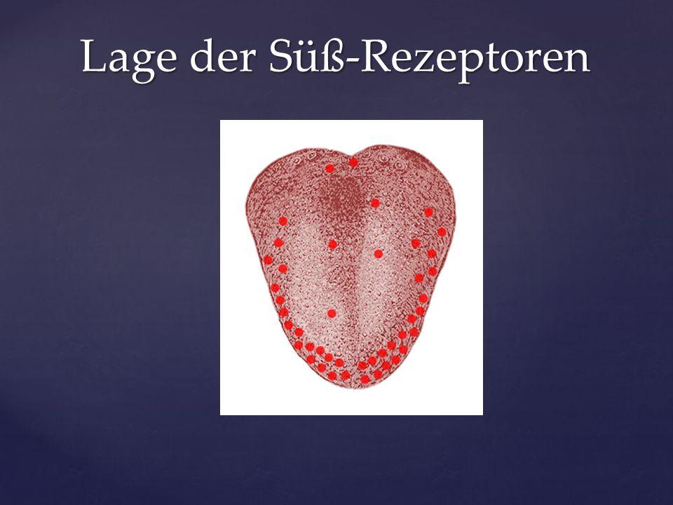 Lage der Süß-Rezeptoren