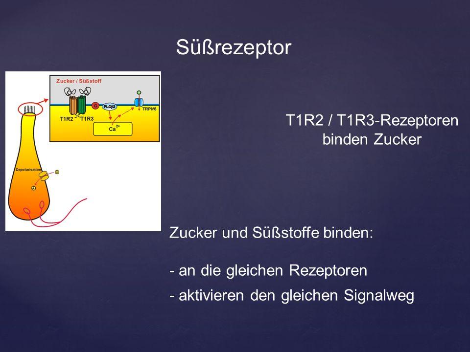{ Süßrezeptor Zucker und Süßstoffe binden: - an die gleichen Rezeptoren - aktivieren den gleichen Signalweg T1R2 / T1R3-Rezeptoren binden Zucker