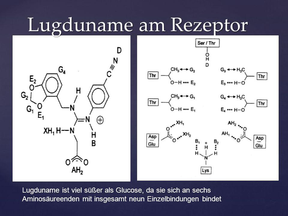 Lugduname am Rezeptor Lugduname ist viel süßer als Glucose, da sie sich an sechs Aminosäureenden mit insgesamt neun Einzelbindungen bindet