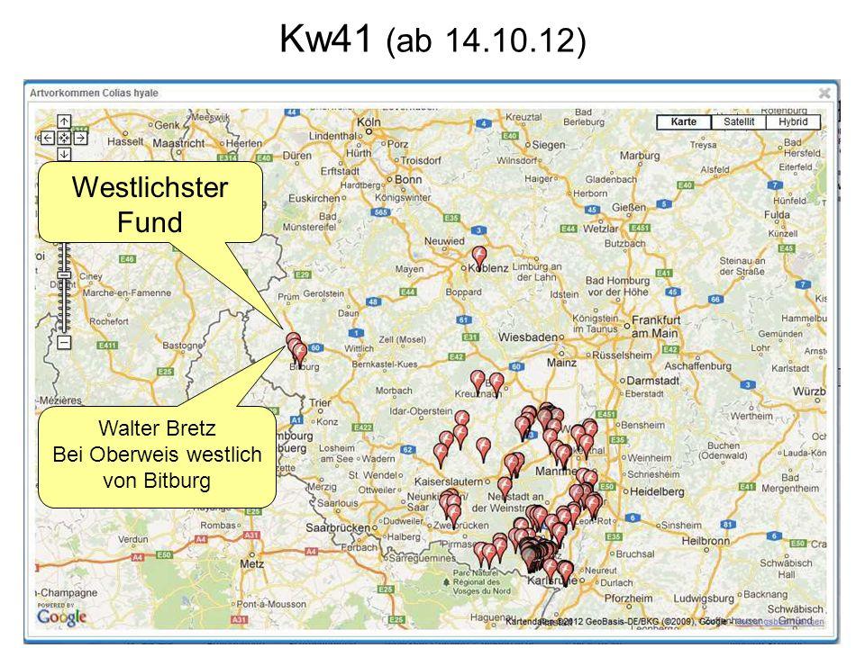 Kw41 (ab 14.10.12) Westlichster Fund Walter Bretz Bei Oberweis westlich von Bitburg