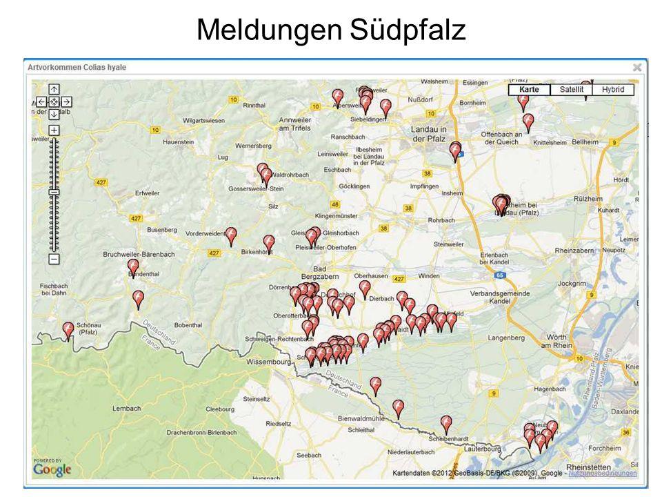 Meldungen Südpfalz