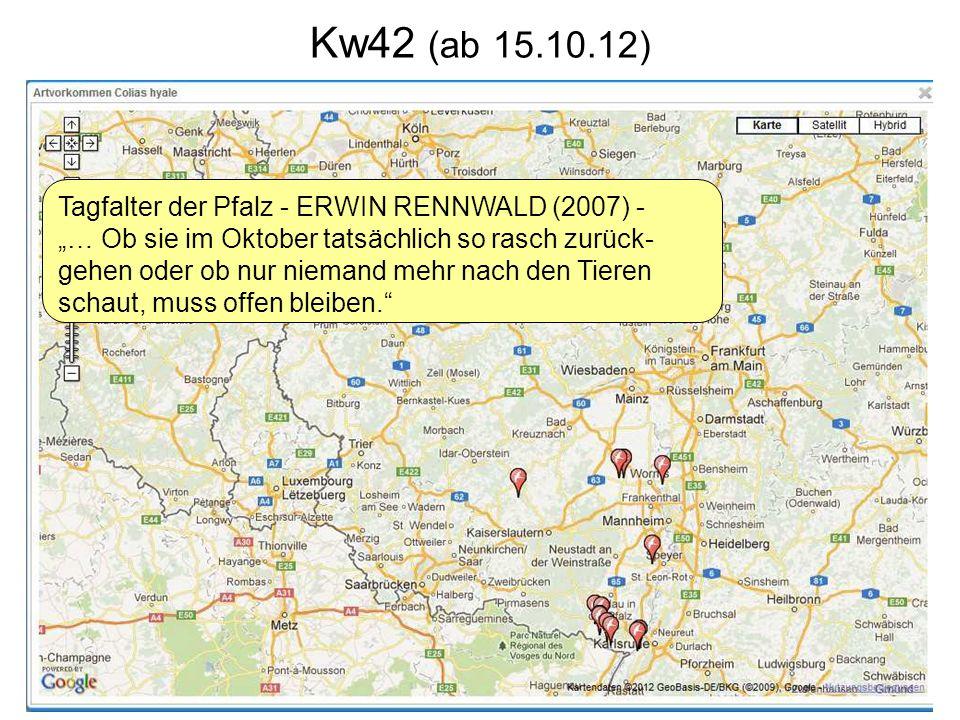 Kw42 (ab 15.10.12) Tagfalter der Pfalz - ERWIN RENNWALD (2007) - … Ob sie im Oktober tatsächlich so rasch zurück- gehen oder ob nur niemand mehr nach den Tieren schaut, muss offen bleiben.