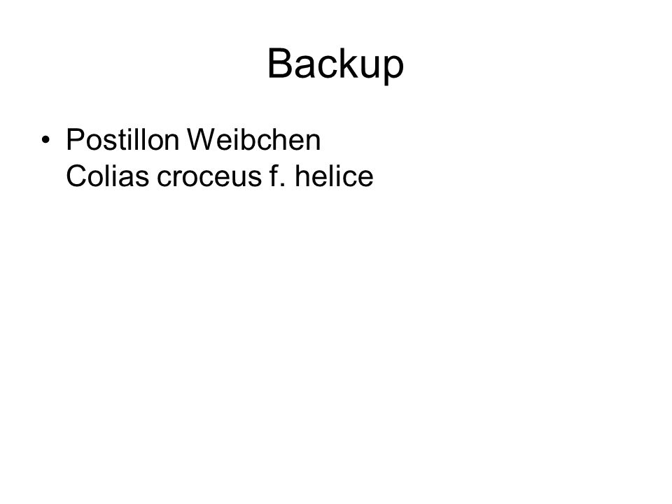 Backup Postillon Weibchen Colias croceus f. helice