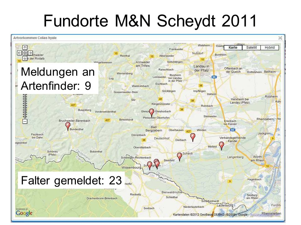 Fundorte RLP 2011 Meldungen Artenfinder gesamt: 13