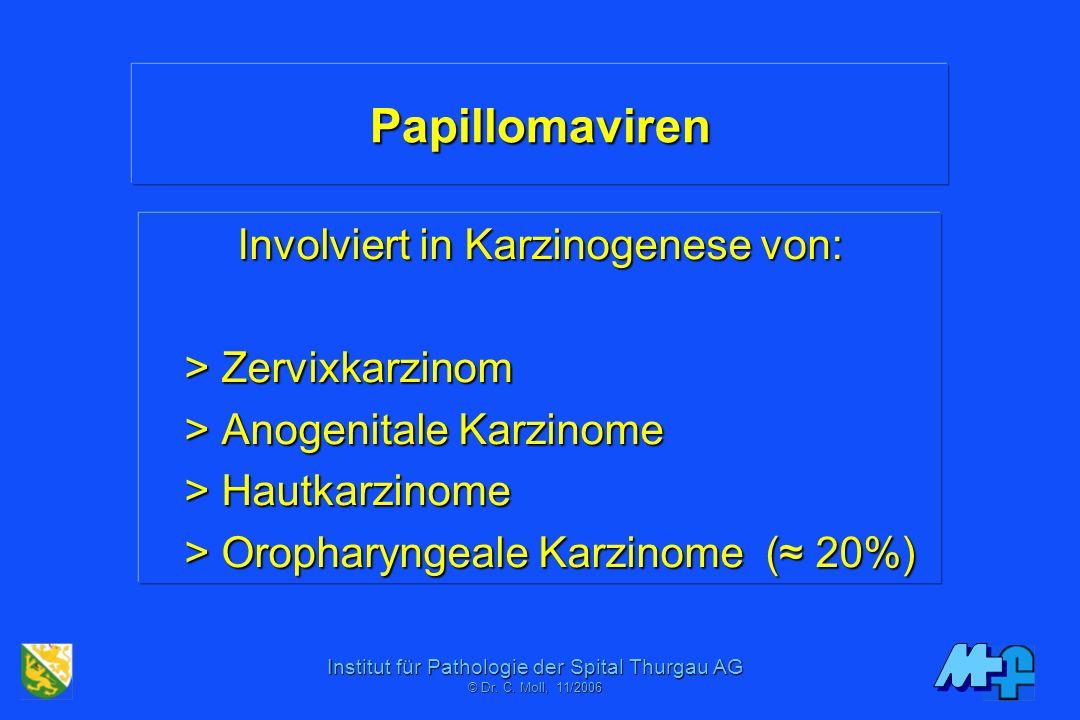 Institut für Pathologie der Spital Thurgau AG © Dr. C. Moll, 11/2006 Konisat