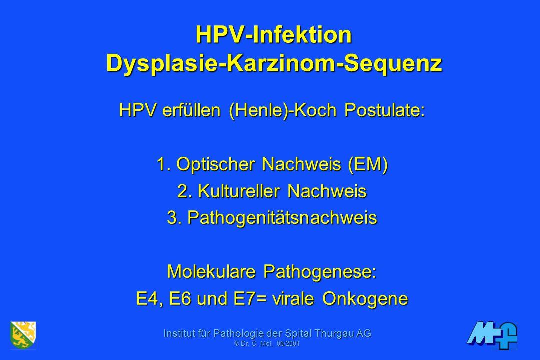 Institut für Pathologie der Spital Thurgau AG © Dr. C. Mol, 06/2001 Papillomaviren 77 Genotypen (+ ca. 30 partiell seq.) 77 Genotypen (+ ca. 30 partie