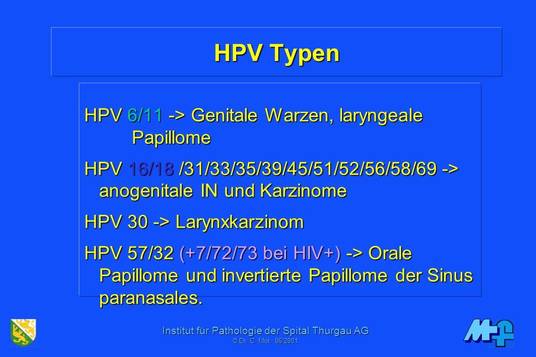 Institut für Pathologie der Spital Thurgau AG © Dr. C. Mol, 06/2001 Papillomaviren in der Onkogenese Mechanismen: E6/E7 (virale) Onkoproteine Zykline