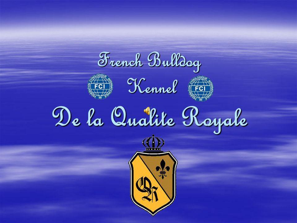 French Bulldog Kennel De la Qualite Royale