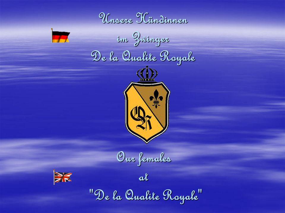 Unsere Hündinnen im Zwinger De la Qualite Royale Our females at De la Qualite Royale De la Qualite Royale