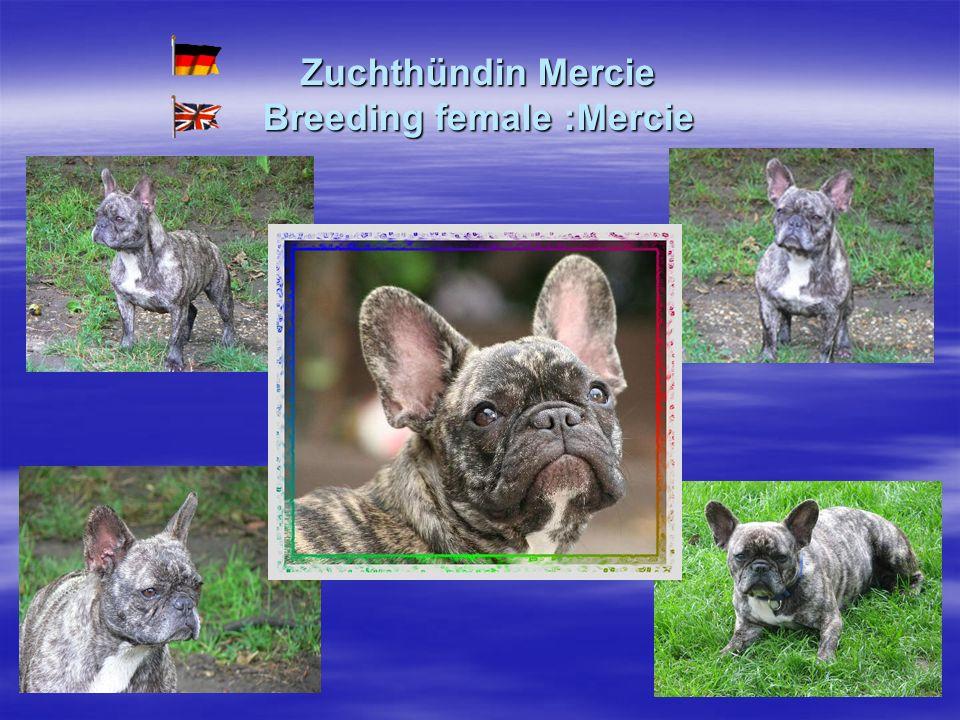 Zuchthündin Mercie Breeding female :Mercie
