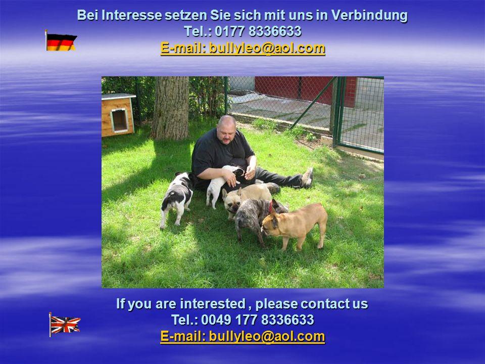 Bei Interesse setzen Sie sich mit uns in Verbindung Tel.: 0177 8336633 E-mail: bullyleo@aol.com E-mail: bullyleo@aol.com E-mail: bullyleo@aol.com If you are interested, please contact us Tel.: 0049 177 8336633 E-mail: bullyleo@aol.com E-mail: bullyleo@aol.com