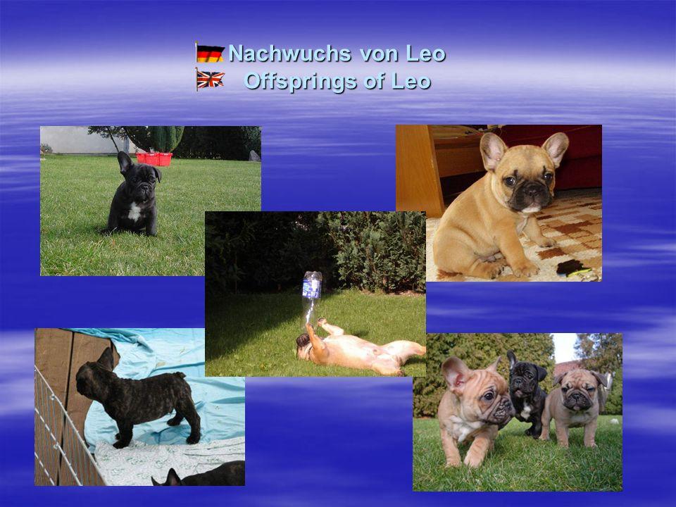 Nachwuchs von Leo Offsprings of Leo