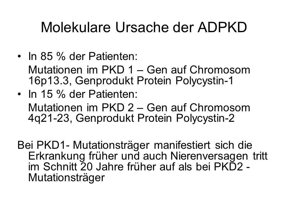 Molekulare Ursache der ADPKD In 85 % der Patienten: Mutationen im PKD 1 – Gen auf Chromosom 16p13.3, Genprodukt Protein Polycystin-1 In 15 % der Patie