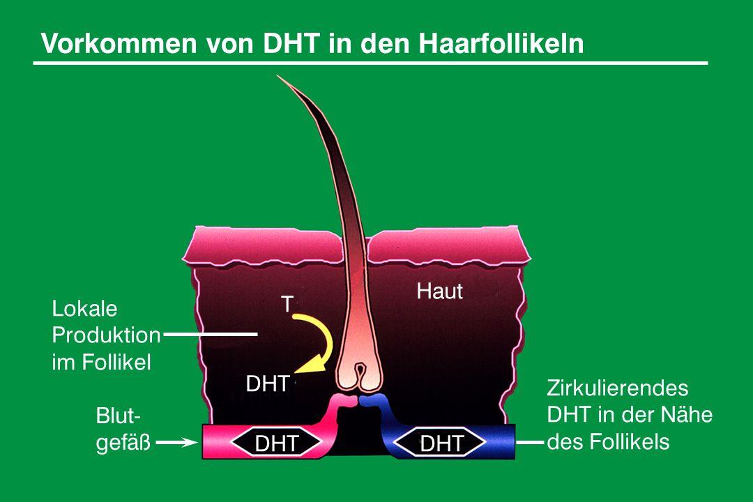 Vorkommen von DHT in den Haarfollikeln Lokale Produktion im Follikel Zirkulierendes DHT in der Nähe des Follikels DHT Haut Blut- gefäß T