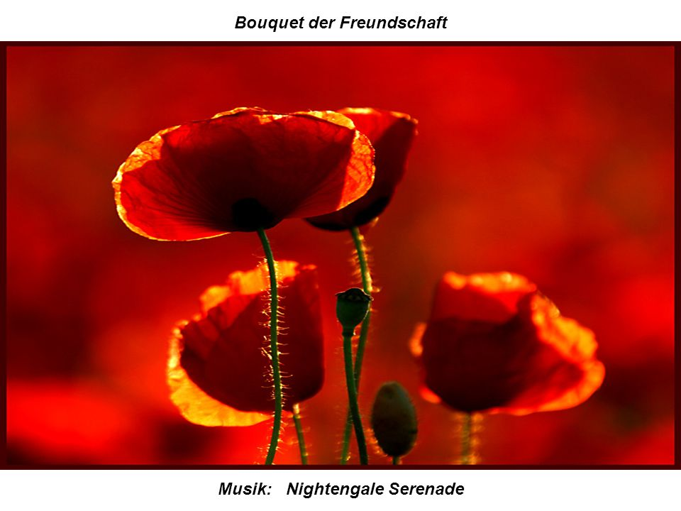 Bouquet der Freundschaft Musik: Nightengale Serenade