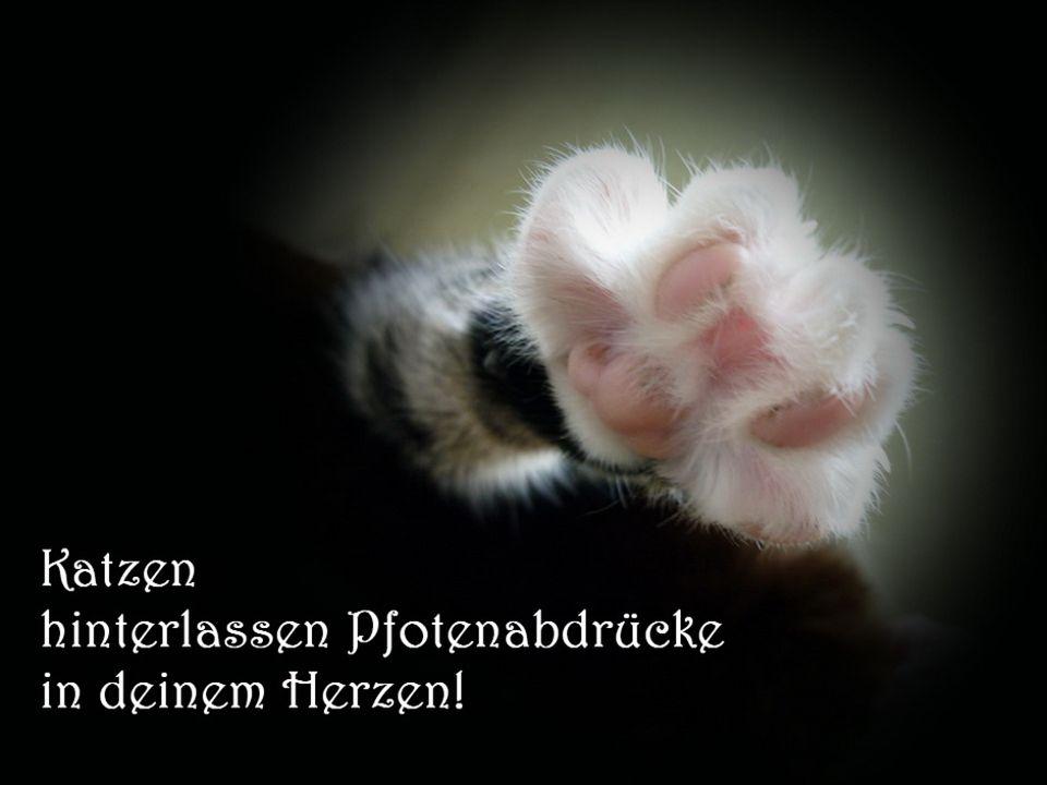 Eine Katze kommt nicht, wenn sie gerufen wird. Sie taucht auf, wenn sie gebraucht wird wenn sie gebraucht wird.