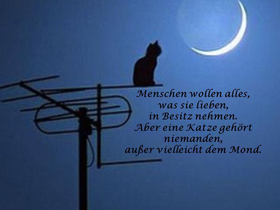 Eine Katze nimmt sich manchmal das Recht heraus, ohne jede Erklärung für einige Tage zu verschwinden. Katzen haben die freiesten Seelen der Welt!