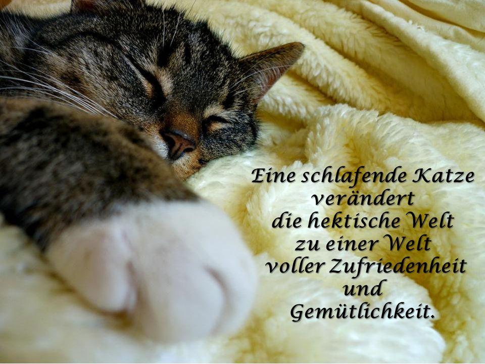 Die Idee der Ruhe existiert in einer sitzenden Katze! in einer sitzenden Katze!