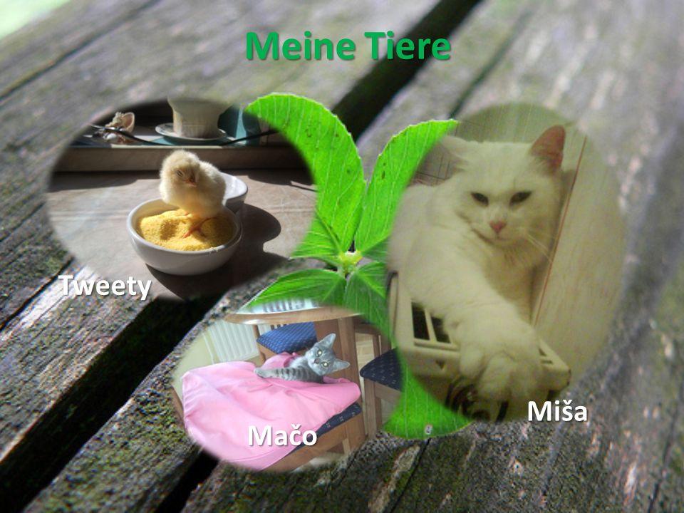 Meine Tiere Miša Mačo Tweety