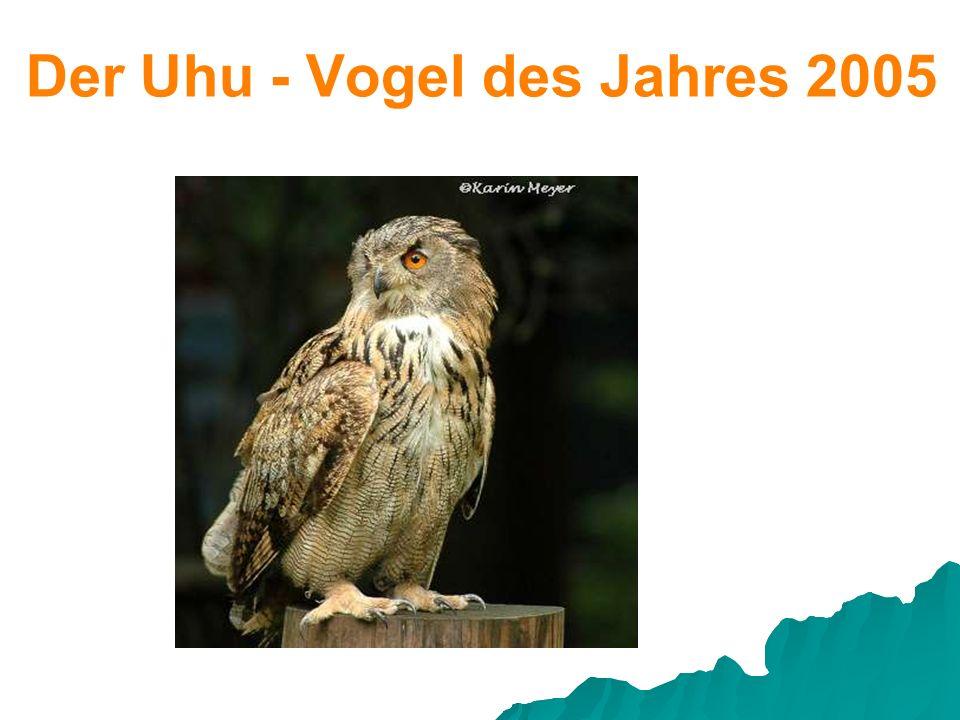Der Uhu - Vogel des Jahres 2005