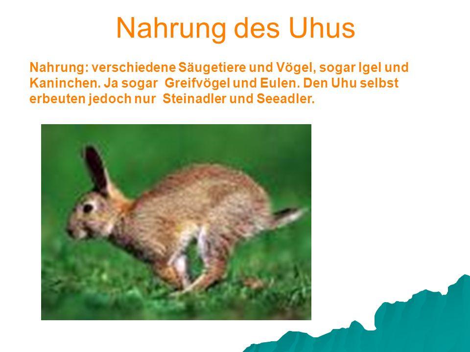 Nahrung: verschiedene Säugetiere und Vögel, sogar Igel und Kaninchen. Ja sogar Greifvögel und Eulen. Den Uhu selbst erbeuten jedoch nur Steinadler und