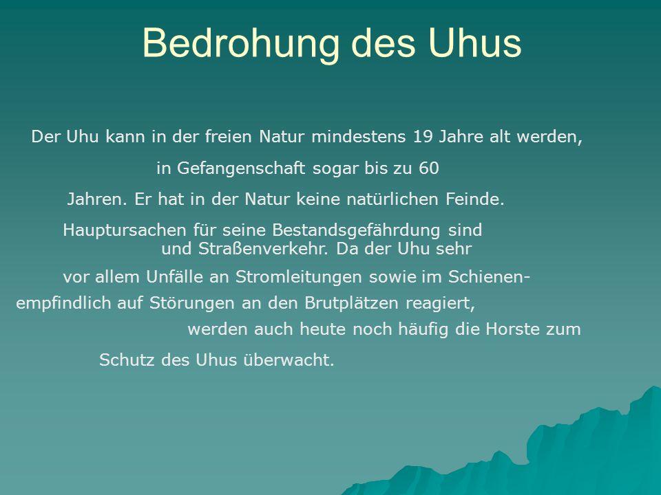 Bedrohung des Uhus Der Uhu kann in der freien Natur mindestens 19 Jahre alt werden, in Gefangenschaft sogar bis zu 60 Jahren. Er hat in der Natur kein