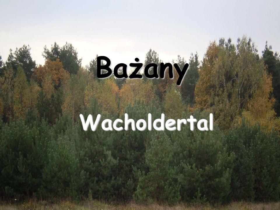 Bażany Wacholdertal